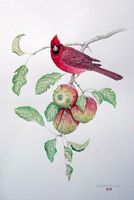 """Cardinals with Wild Apples"""