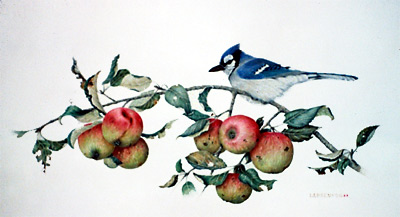 """Blue Jay and Wild Apples"""